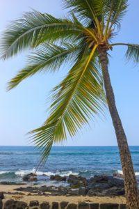 Coast of Kailua-Kona with Palm, Big Island, Hawaii.