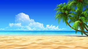 A scenic beach with a palm tree on the right side and a blue ocean.