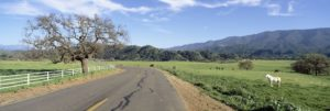 A road in the Santa Ynez valley with horses and trees.